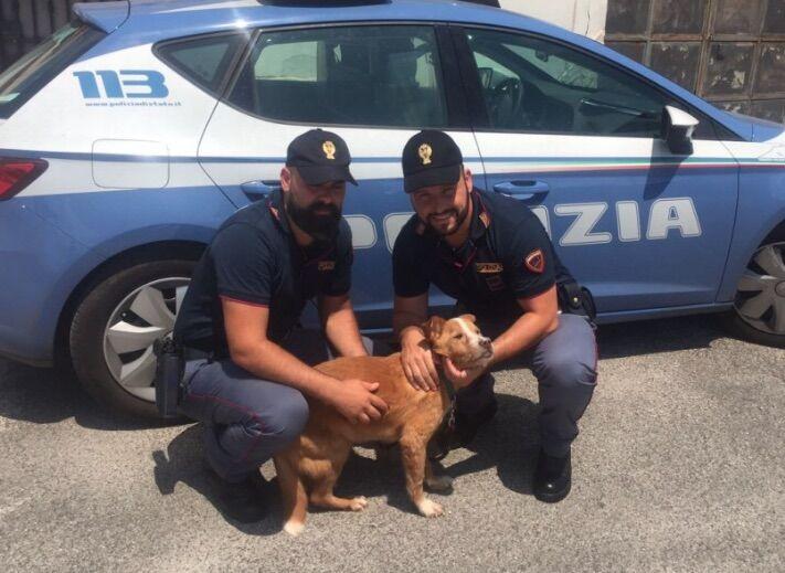 Prende a calci il cane e minaccia di lanciarlo dal balcone, arrestato 31enne