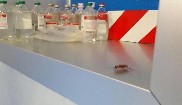 Napoli, nuova denuncia su ospedali: scarafaggi al San Giovanni Bosco