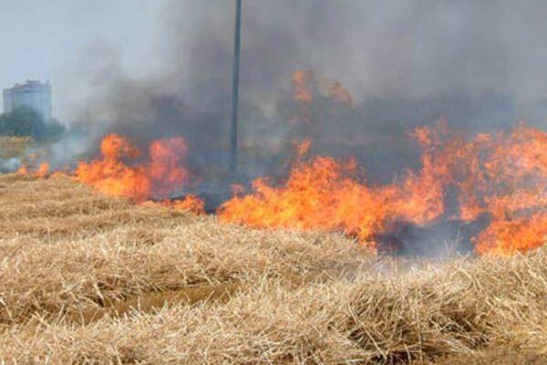 Giugliano, multe fino a 10mila euro per chi dà fuoco a erba e sterpaglie