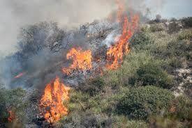 Incendio a Castellammare: bruciano anche piante di marijuana