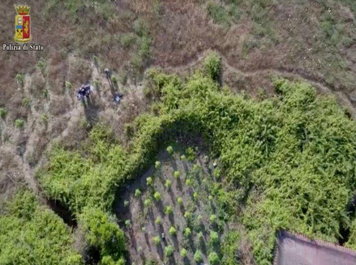 Torre Annunziata, scoperta piantagione di marijuana vicino l'autostrada A3. VIDEO