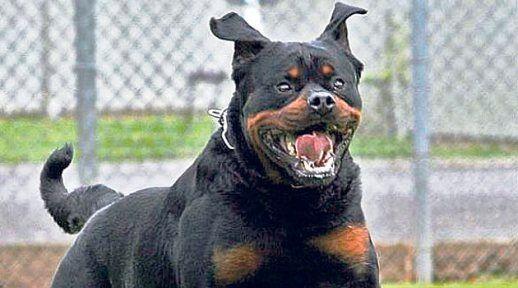 Vincenza Mei sbranata e uccisa dal suo cane
