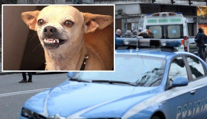 Orrore nel napoletano: infastidito dall'abbaiare di un cane, gli schiaccia la testa e lo uccide