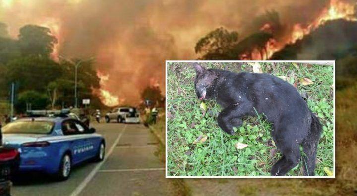 Incendio al Vesuvio, gatti in fiamme usati come micce: ecco la tecnica horror dei piromani
