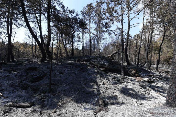 Incendi in Campania, adesso c'è il rischio frane: De Luca convoca riunione