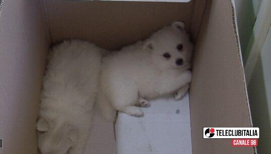 Cani abbandonati d'estate, come comportarsi in casi di emergenza