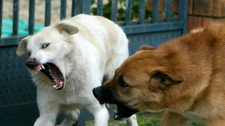 Paura nel Casertano, 15enne assalita da cani randagi
