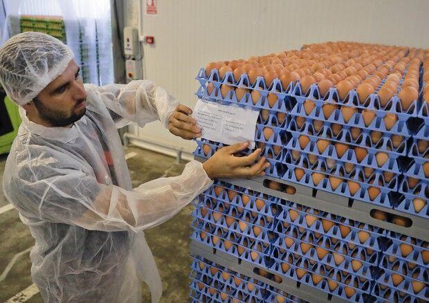 Uova contaminate pure in Campania, sequestri anche nel napoletano