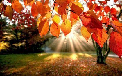 autunno immagini