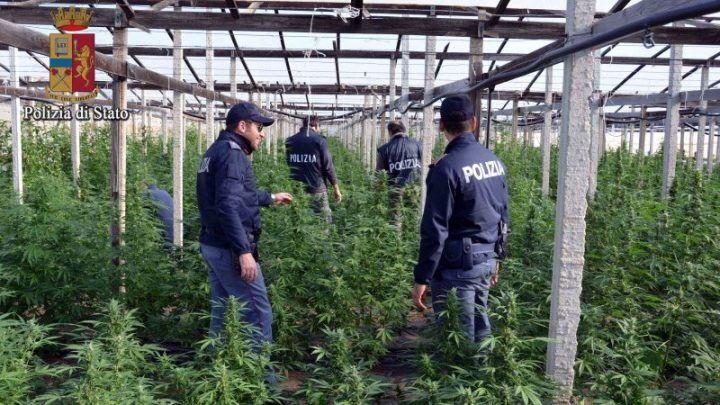 Pompei, i poliziotti scoprono piantagione di droga nel suo terreno: arrestato floricoltore