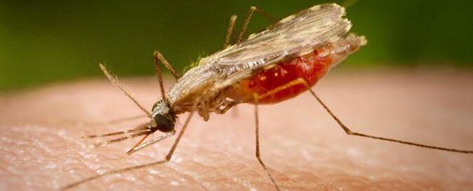 Sintomi malaria: trasmissione, diagnosi e cura del paludismo. VIDEO