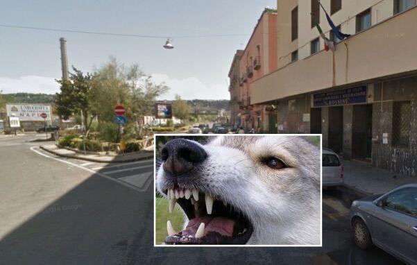 Napoli. Follia del clochard a Bagnoli, arriva la polizia: agente azzannato dal cane