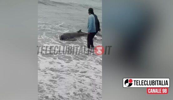Licola, cittadini si tuffano nelle acque gelide per salvare un delfino. VIDEO