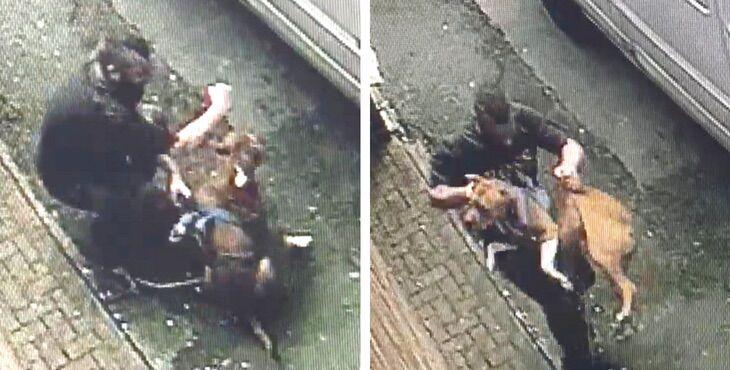 napoli uomo morde il suo cane