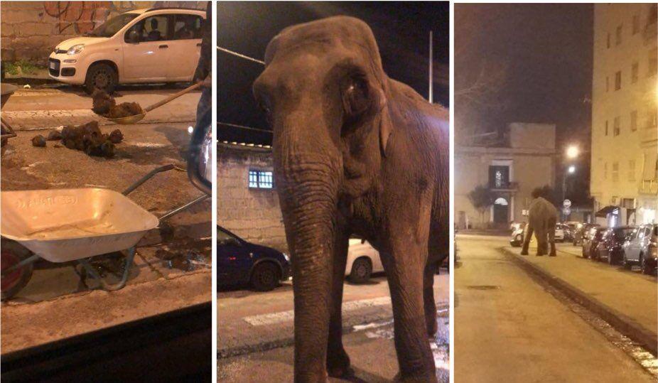 elefante scappa dal circo san giorgio a cremano sindaco zinno