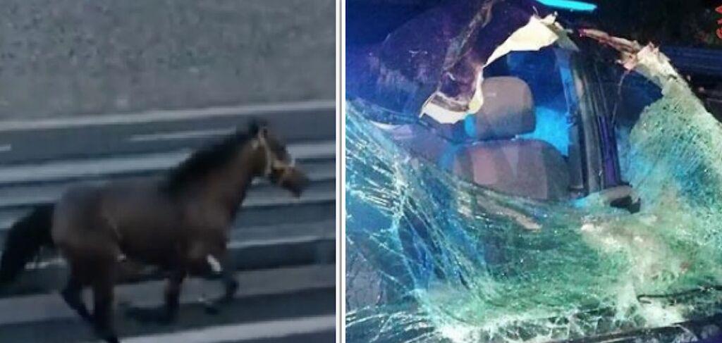 cavallo imbizzarrito