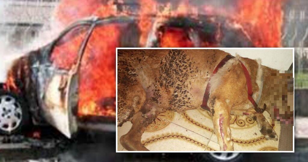 trabia cane bruciato vivo