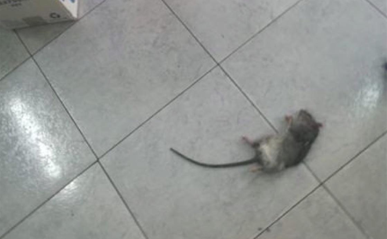 topo morto scuola