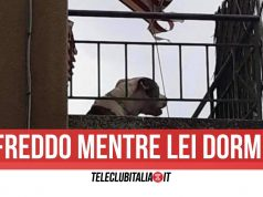 cane maltrattato pomigliano