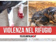 massacro rifugio cani via ripuaria giugliano varcaturo