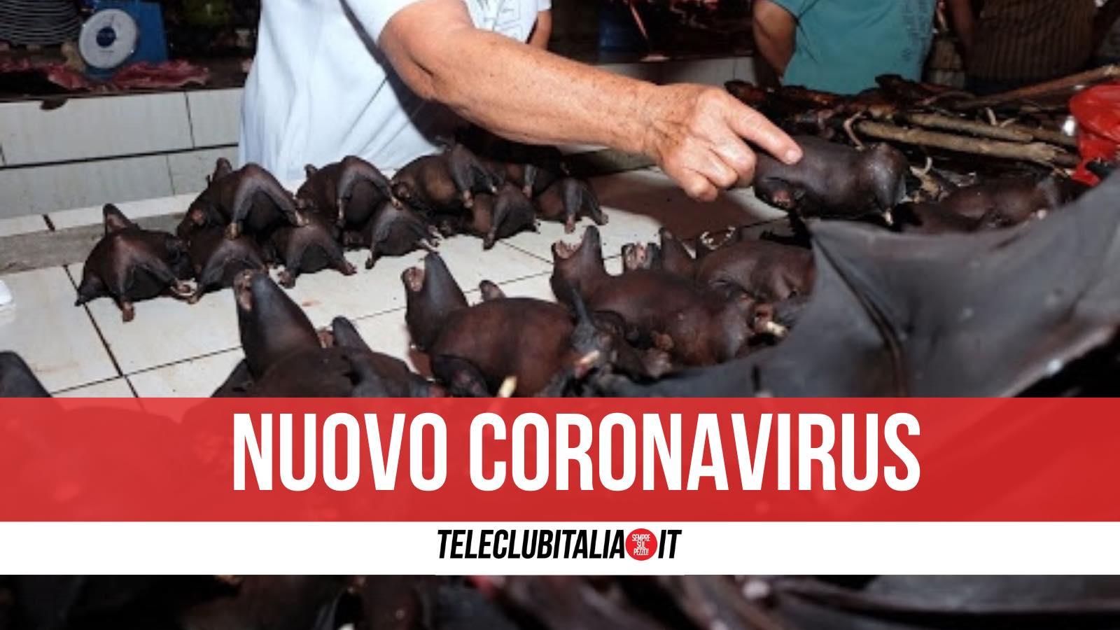 pipistrelli nuovo coronavirus thailandia