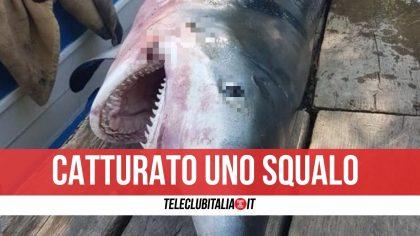 Cilento, catturato uno squalo volpe di 2 metri e mezzo alla foce del Sele