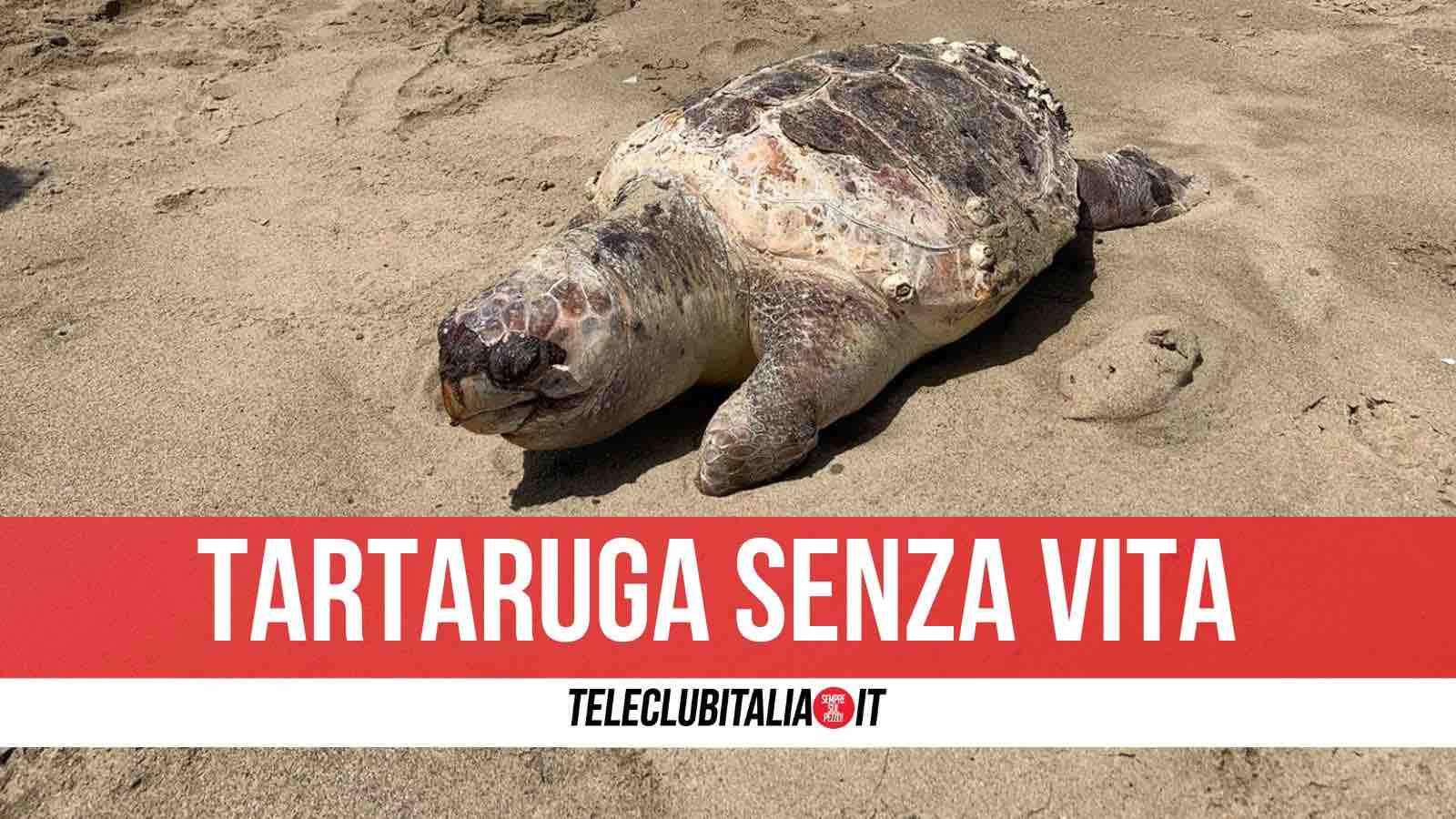 tartaruga morta licola