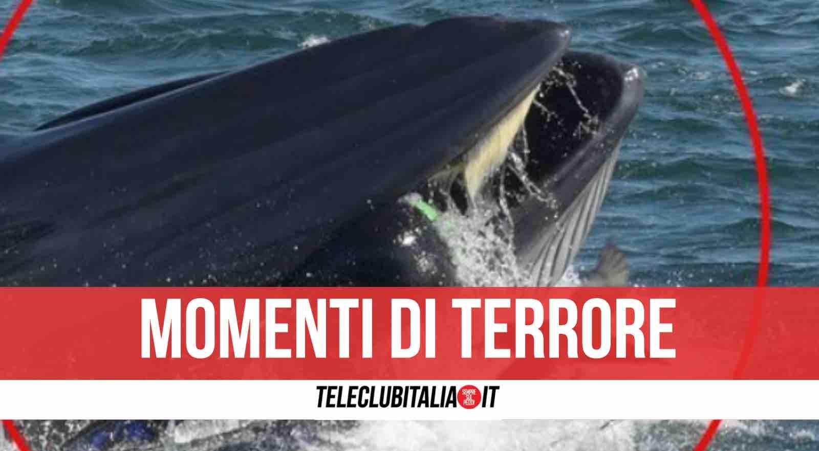 sub ingoiato balena