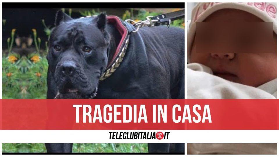 irlanda bimba uccisa dal cane