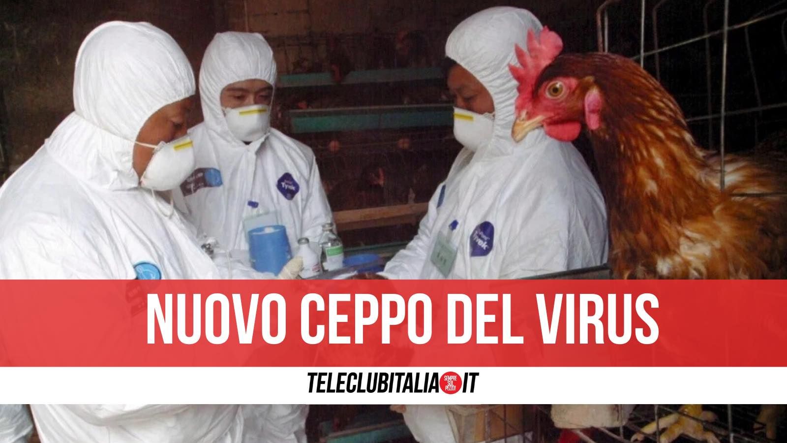 virus influenza aviaria cina