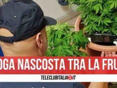 marijuana acerra sequestro