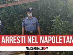 acerra arresti marijuana