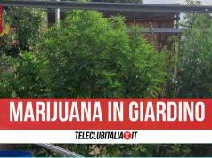 droga giardino pompei